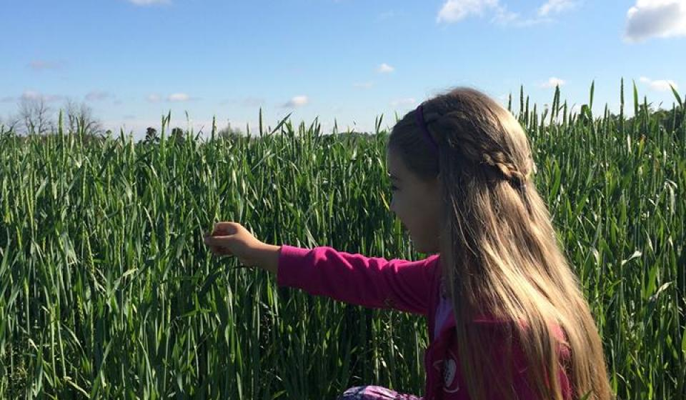 Young girl in a wheat field